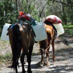 horse-to-el-zotz